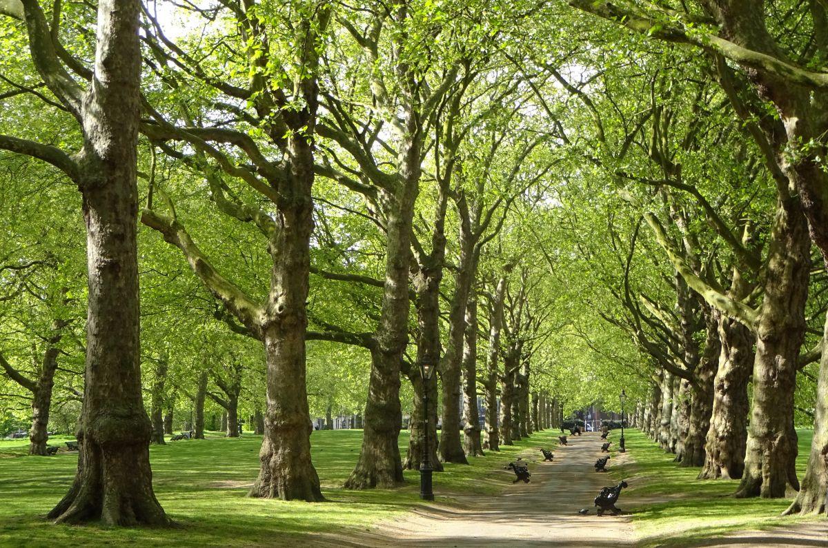 Lợi ích của cây xanh trong việc bảo vệ môi trường và sức khỏe