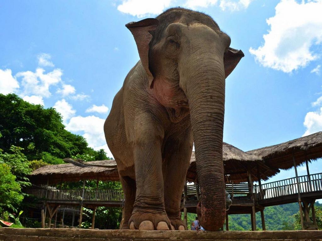 Thái Lan có các công viên hay các khu bảo tồn voi như Công viên Voi ở Chiang Mai. Tuy nhiên, ở đây du khách chỉ có thể tiếp cận các con voi chứ không được cưỡi chúng.