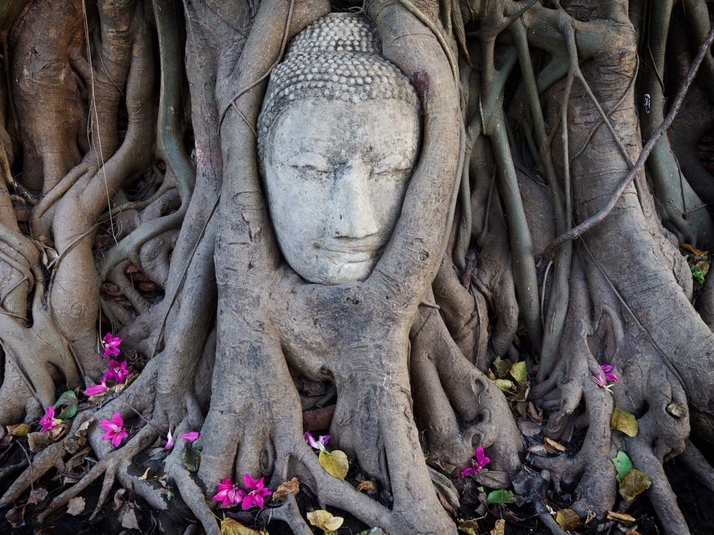 Wat Mahathat nằm trong Công viên lịch sử Ayutthaya có các di tích của một tu viện Phật giáo. Đầu Phật được bao bọc trong rễ cây là một điểm tham quan nổi tiếng ở đây.