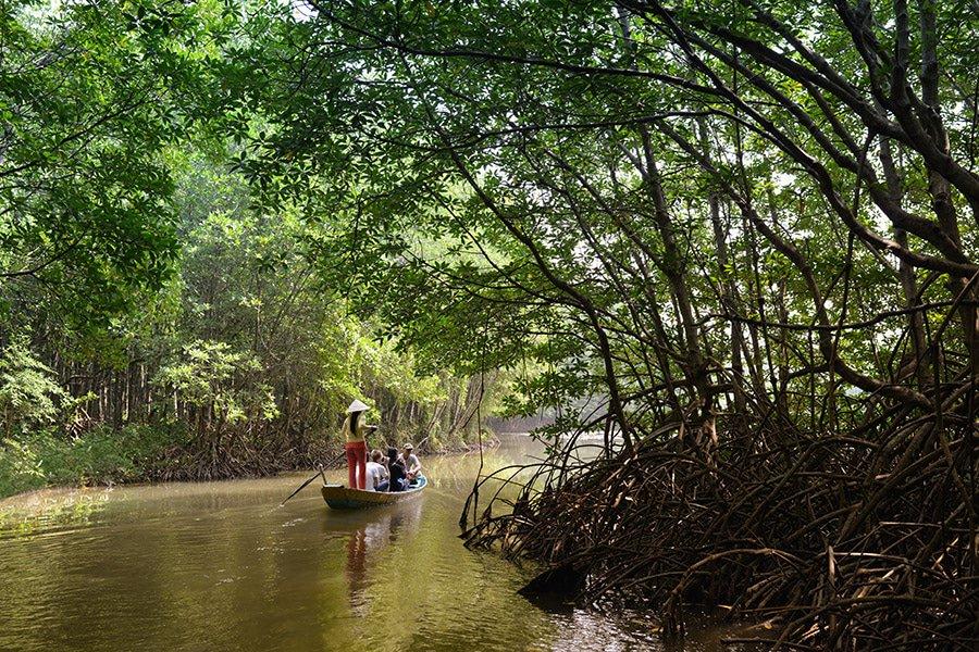 Tầm quan trọng đặc biệt của hệ sinh thái rừng ngập mặn ở Việt Nam