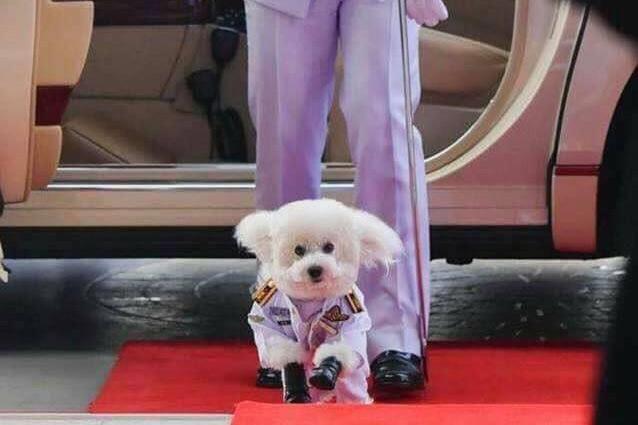 Chuyện về chú chó được phong hàm Đại tướng ở Thái Lan