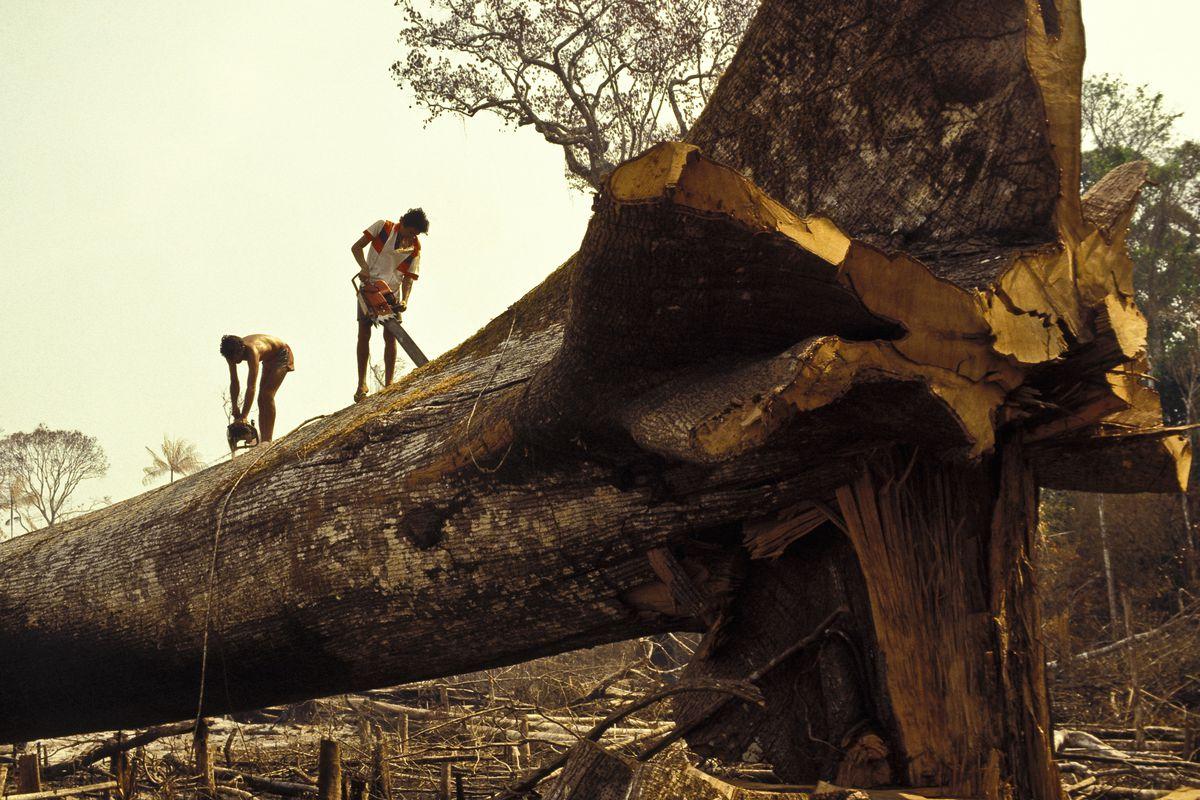Những điều cần biết về tội phạm môi trường