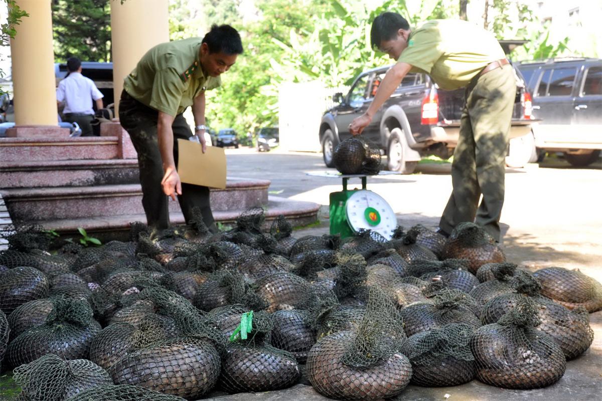 Tổng quan hệ thống văn bản pháp luật về bảo vệ động vật hoang dã