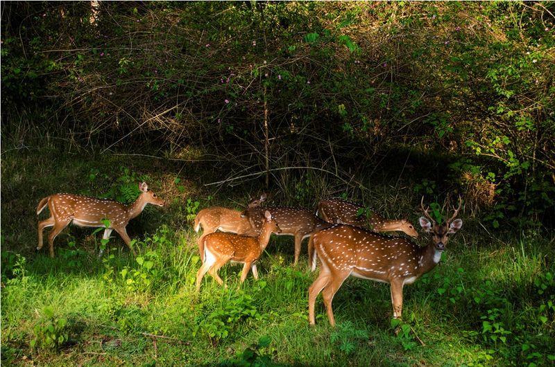 Giáo dục bảo tồn đa dạng sinh học: Những điều gợi mở