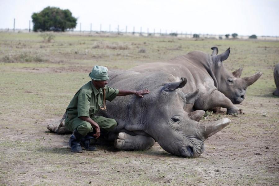 Tuyên truyền đủ kiểu, vì sao người Việt Nam đốt tiền cho sừng tê giác?