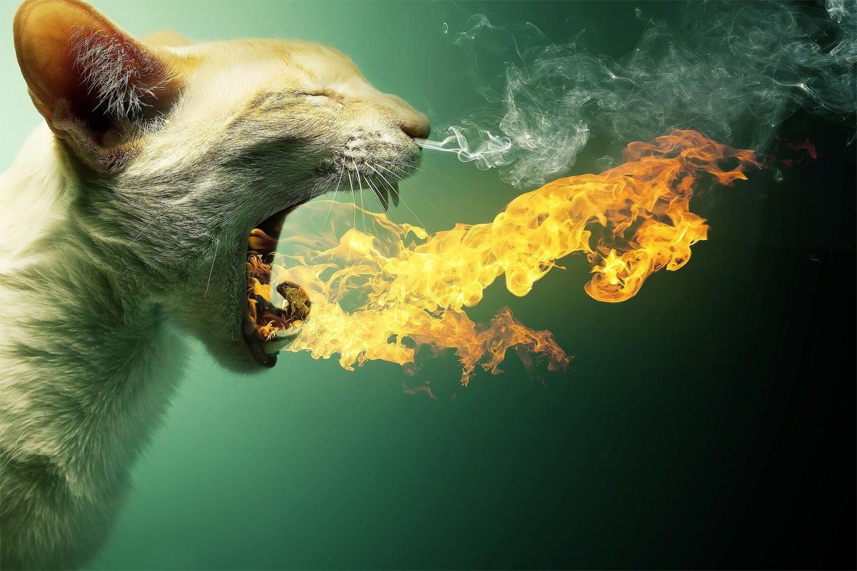 Trận Mèo Lửa 1770: Cuộc thảm sát mèo rùng rợn nhất lịch sử Việt Nam