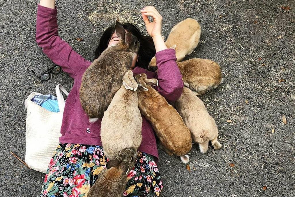 Chùm ảnh: Khám phá đảo thỏ nổi tiếng của Nhật Bản
