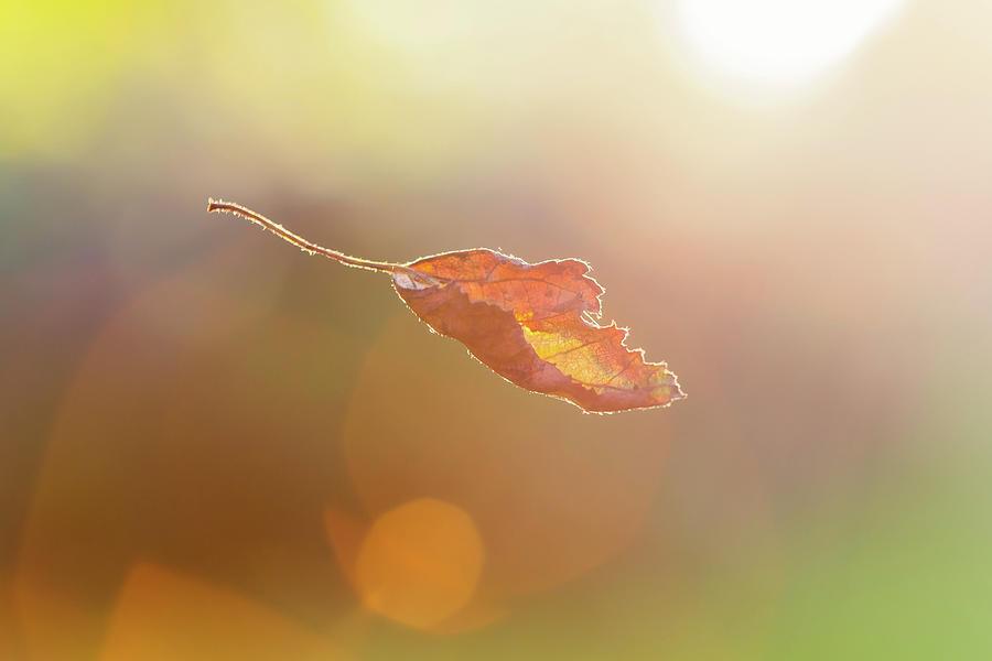 Để gió cuốn đi – triết lý Phật giáo phía sau một lời ca