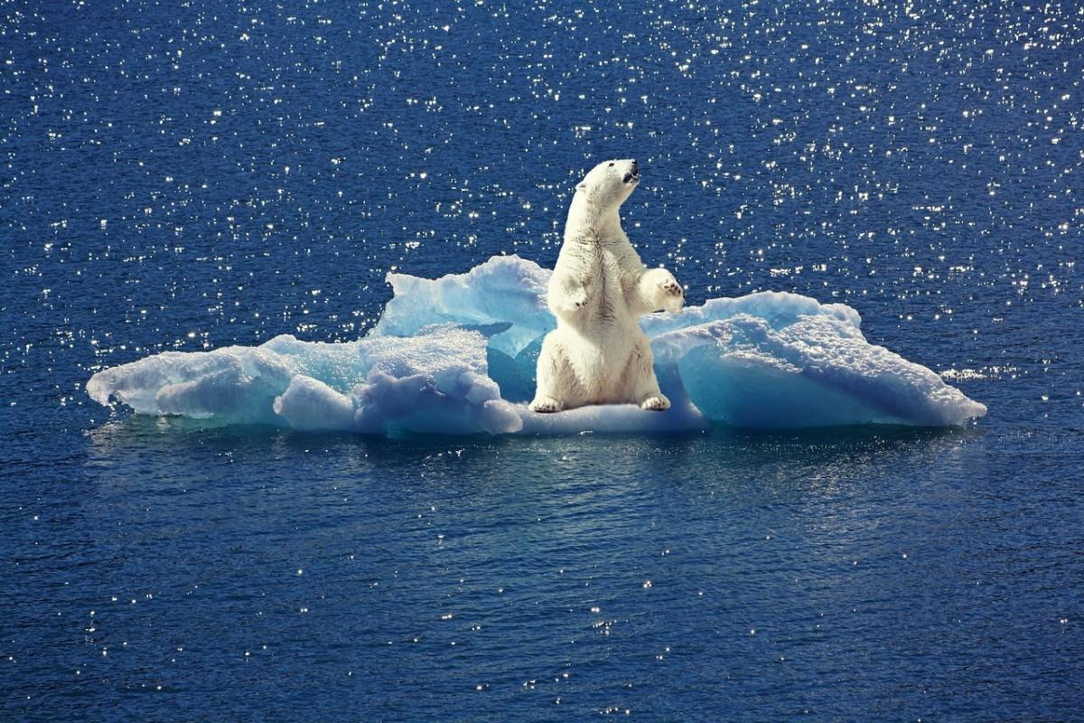 5 tác hại kinh hoàng của sự nóng lên toàn cầu