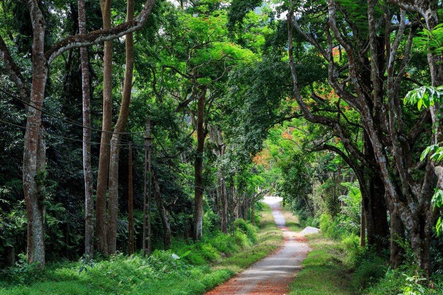 Phân loại các kiểu rừng chính ở Việt Nam dựa trên đặc điểm sinh thái học