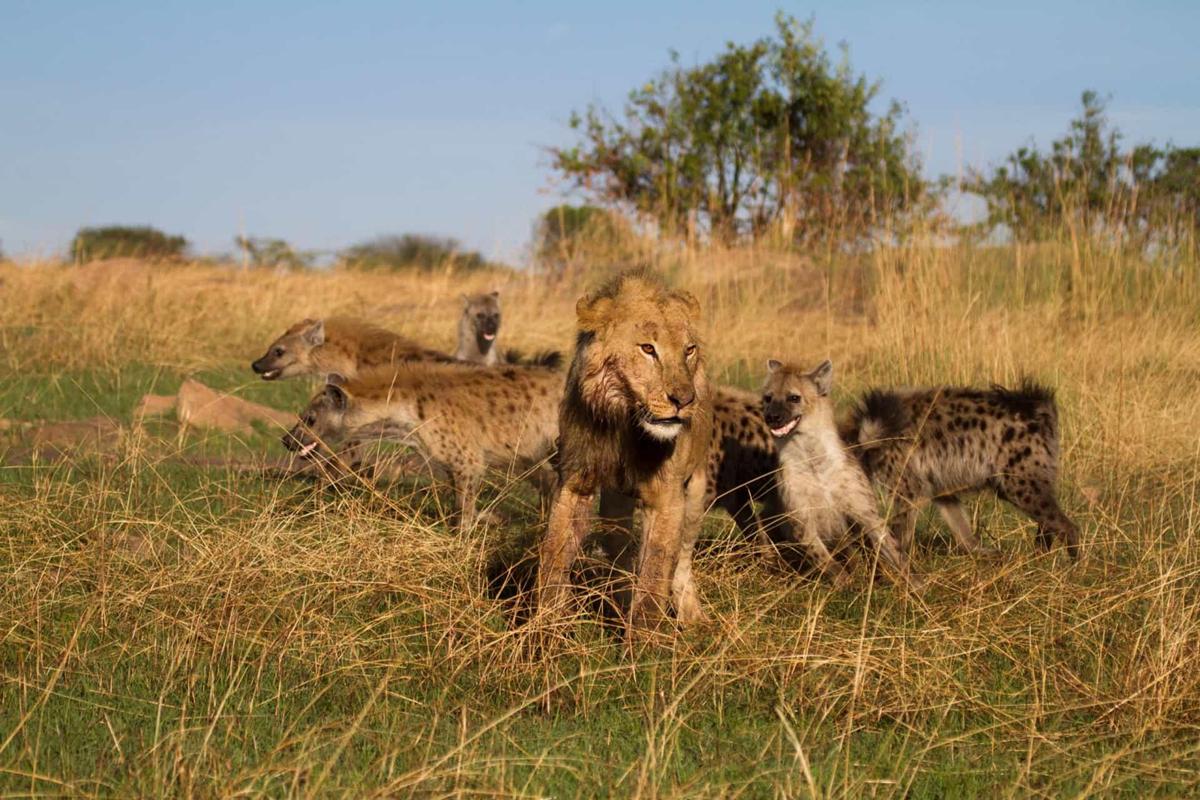 Chùm ảnh: Đời thực của thế giới động vật trong 'Vua Sư tử'