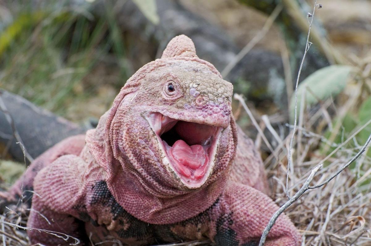 Chùm ảnh: Những loài động vật kỳ lạ trên hòn đảo Galapagos