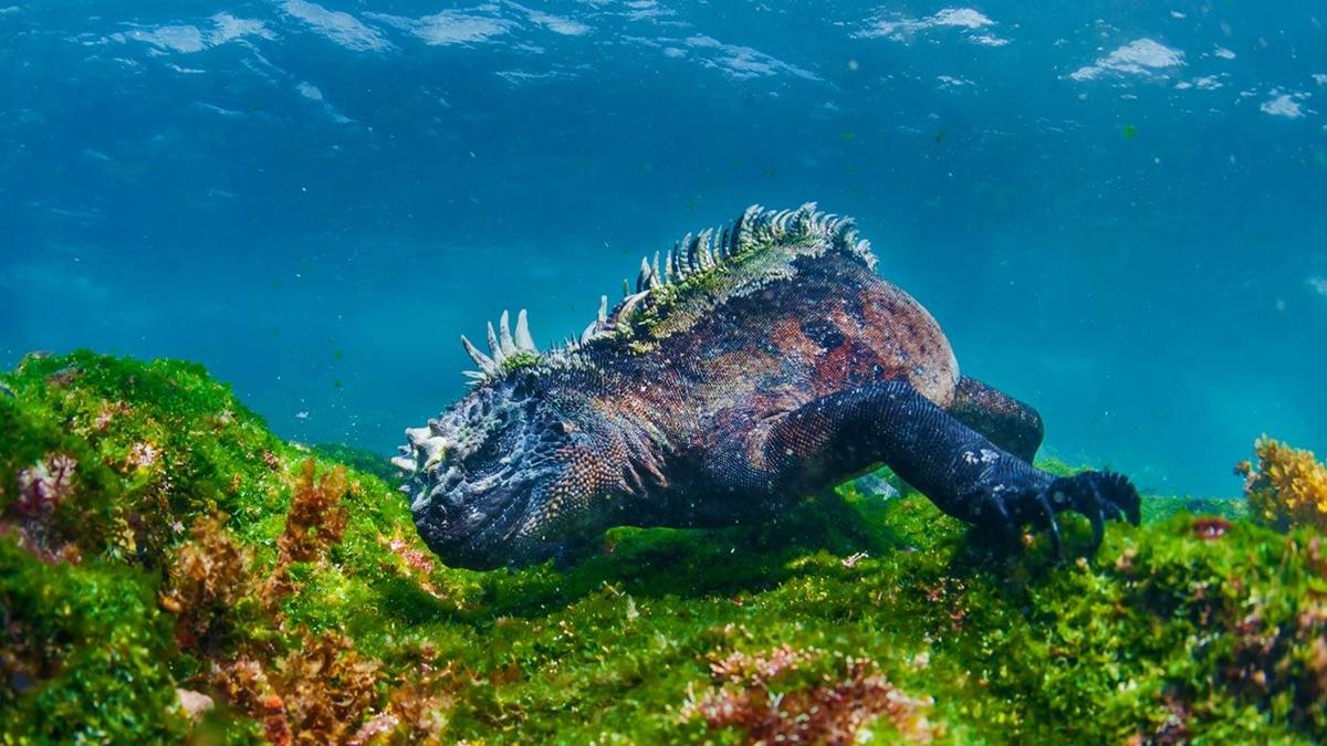 9 dong vat ky la du khach co the 'dung do' khi tham hiem Galapagos hinh anh 3