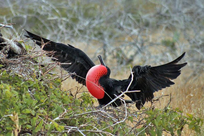 9 dong vat ky la du khach co the 'dung do' khi tham hiem Galapagos hinh anh 5