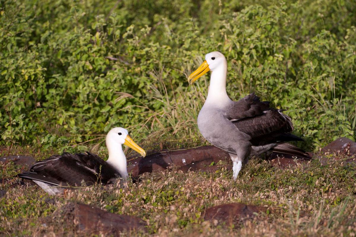 9 dong vat ky la du khach co the 'dung do' khi tham hiem Galapagos hinh anh 7