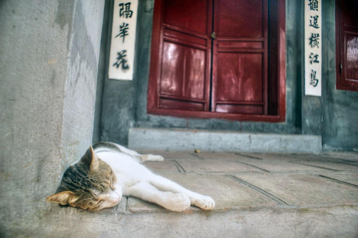 Chùm ảnh: Đền Ngọc Sơn – ngôi đền đặc biệt nhất của thủ đô Hà Nội