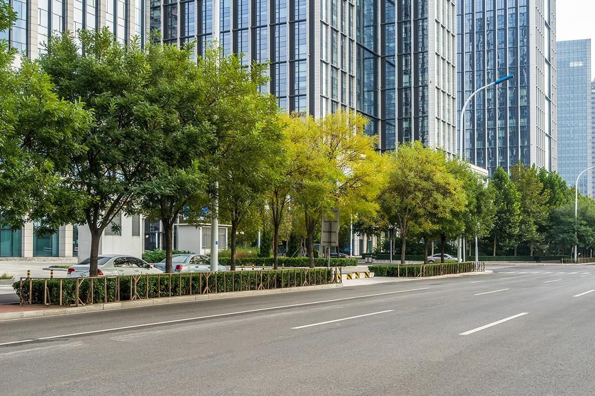 Đôi điều về cây xanh và cảnh quan đô thị