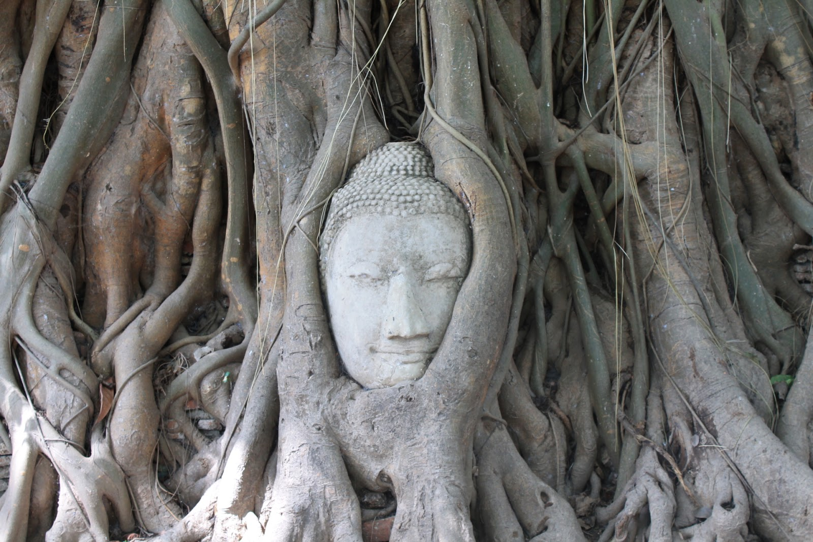 Phân tâm học hiện đại qua cái nhìn Phật giáo