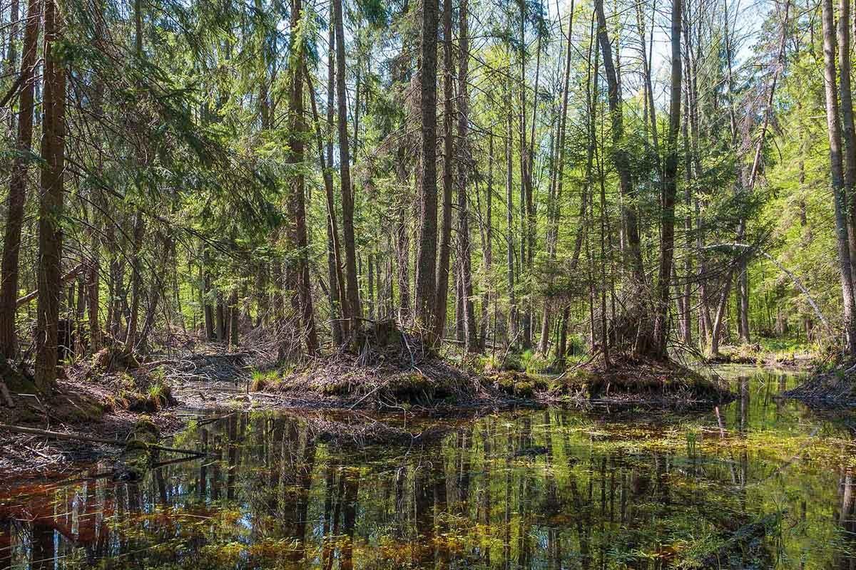 Một số bài học về quản lý rừng bền vững ở các nước phát triển