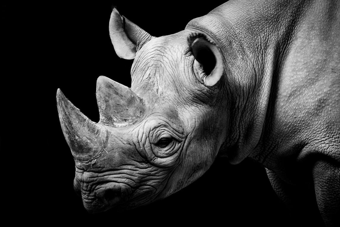 Việt Nam đã thất bại trước vấn nạn buôn bán động vật hoang dã