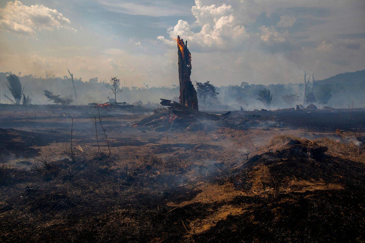 Điều gì sẽ xảy ra nếu rừng Amazon biến mất?