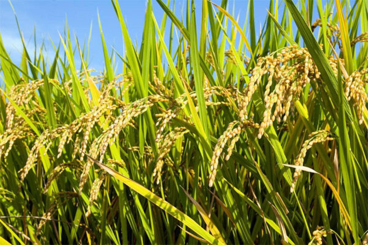 Nền nông nghiệp Việt Nam và nỗi đau của 'bờ xôi ruộng mật'
