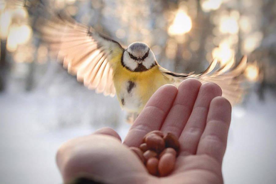 Chùm ảnh: Thế giới động vật tuyệt đẹp qua ống kính Konsta Punkka