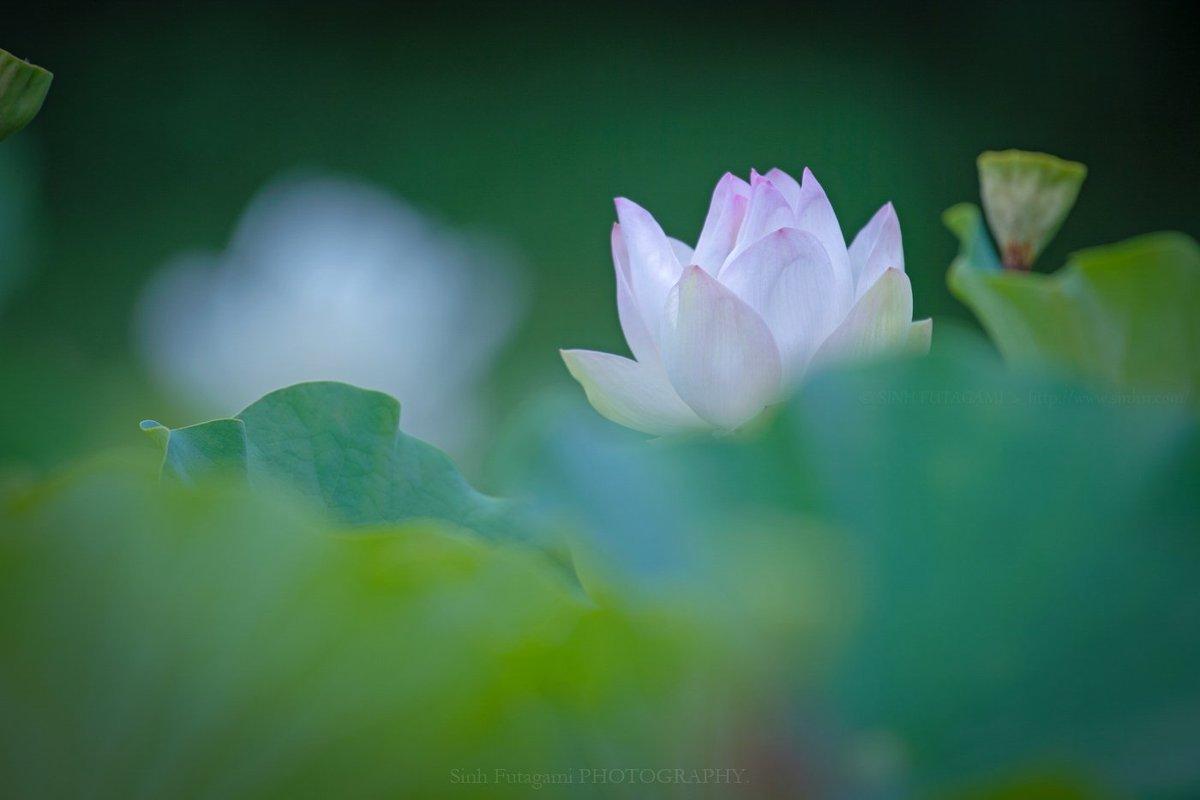 Những cái nhất của Phật hoàng Trần Nhân Tông