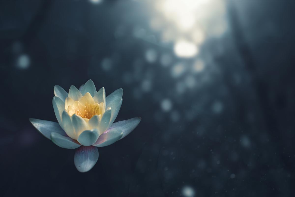 Thiền Vipassana – một lối thoát cho cuộc khủng hoảng tinh thần đương đại