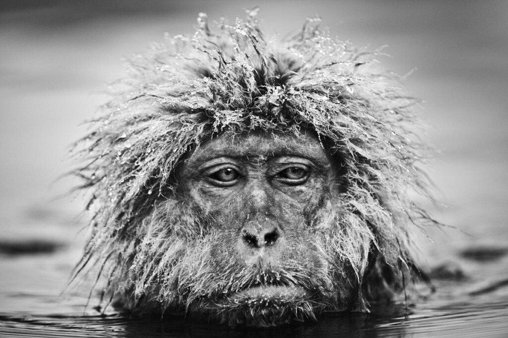 Ảnh đen trắng tuyệt đẹp về thế giới động vật hoang dã của David Yarrow