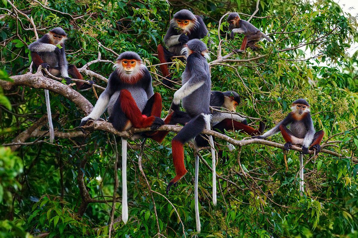 Điều cần biết về đa dạng sinh học của rừng Việt Nam