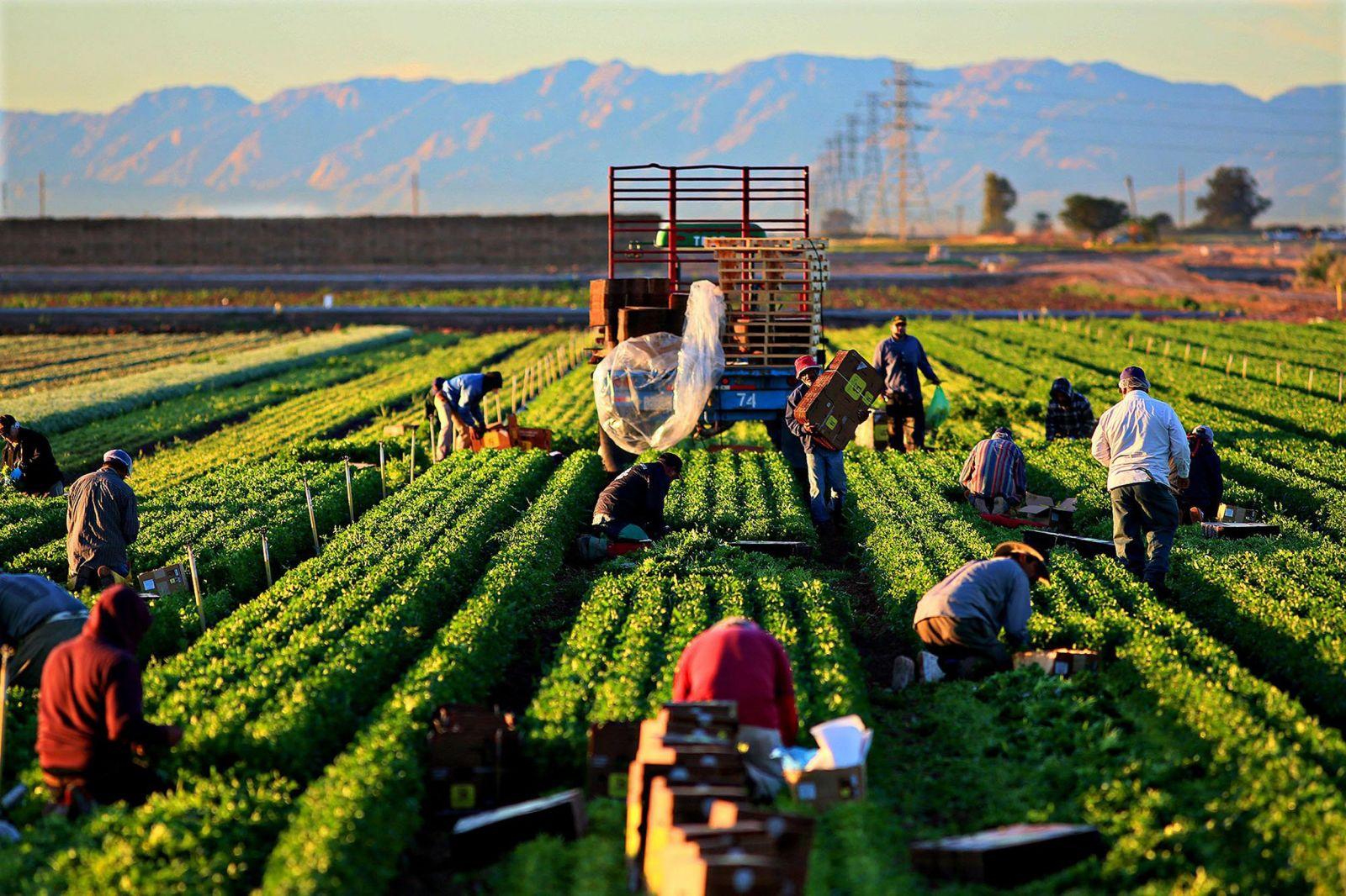 Toàn cầu hóa và các vấn đề môi trường nảy sinh trong nông nghiệp và nông thôn