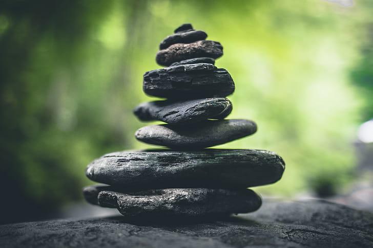 Đạo đức môi trường – một cách tiếp cận từ Phật giáo
