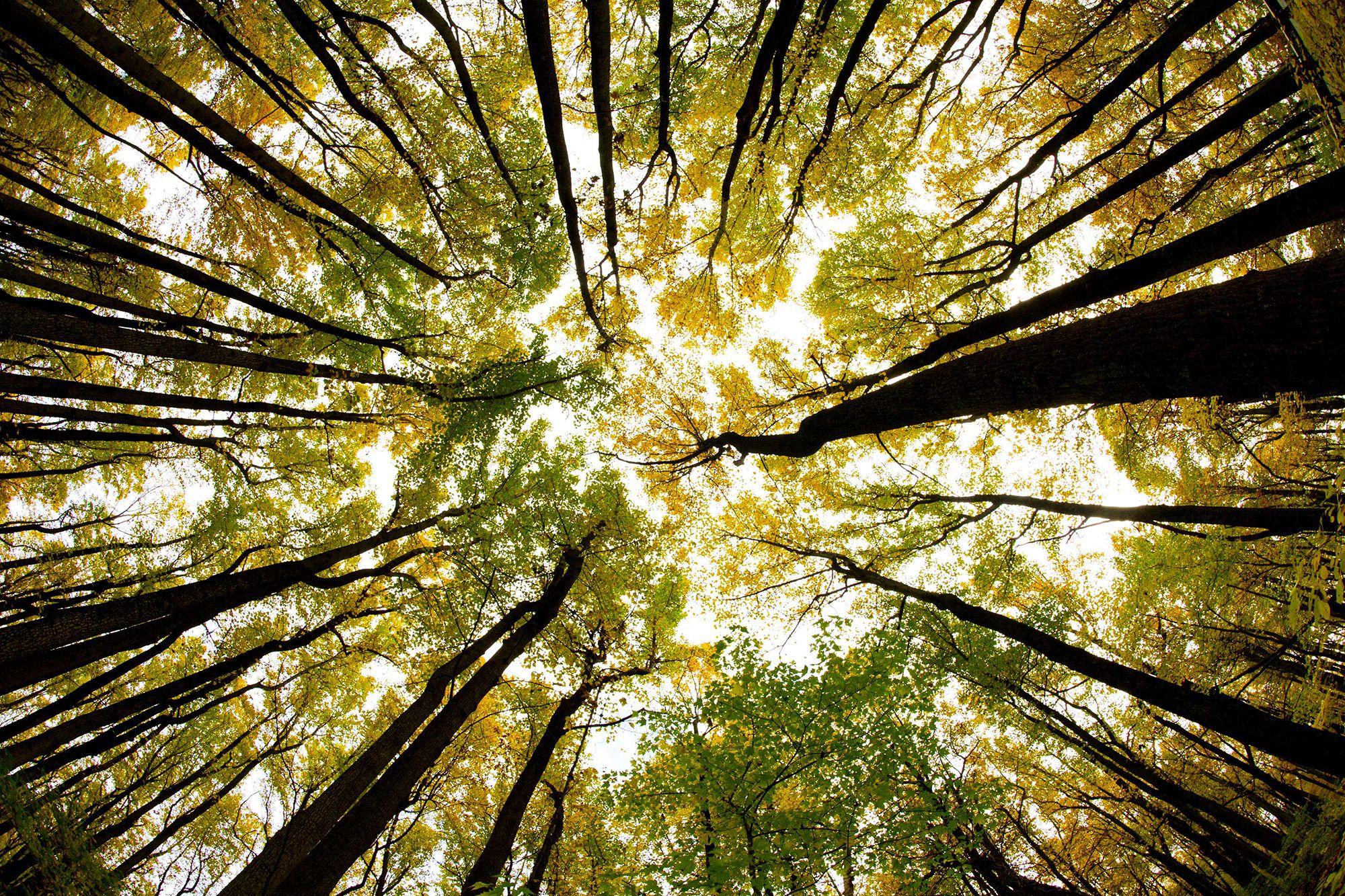 Những điều cần biết về thiên nhiên và tài nguyên thiên nhiên
