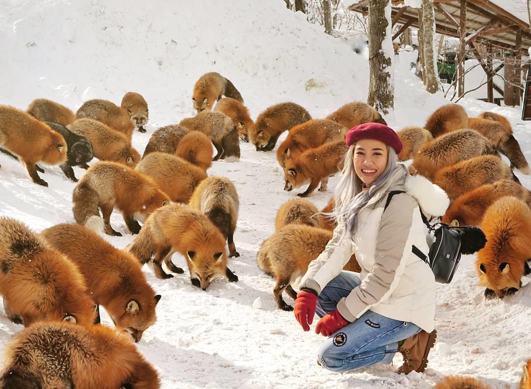 Chùm ảnh: Ngôi làng có hàng trăm con cáo béo mượt ở Nhật Bản