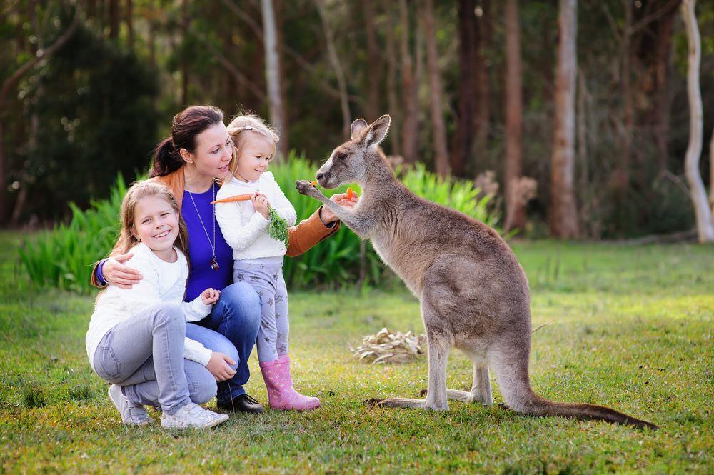 Nghich ly kangaroo - bieu tuong quoc gia bi de xuat cho len ban nhau hinh anh 4