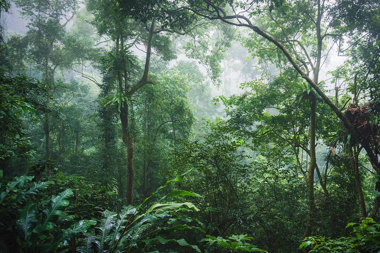 Những điều cần biết về rừng đặc dụng