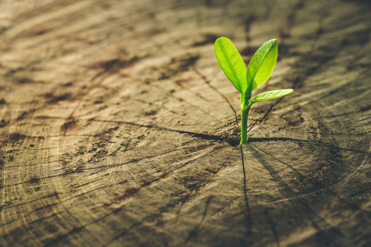 Chìa khóa tư duy trong việc giải quyết mối quan hệ giữa hiện đại hóa và môi trường sinh thái