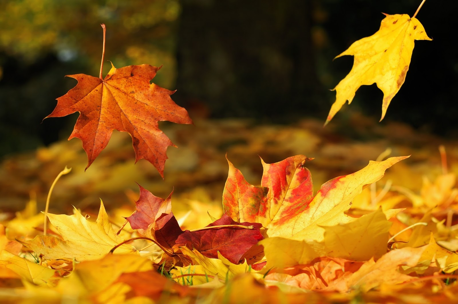 Sự thức tỉnh của cảm thức mùa thu trong thi ca