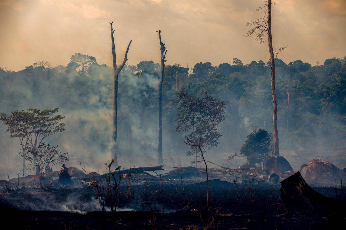 Amazon: Câu chuyện về bản án tử hình con người dành cho rừng xanh