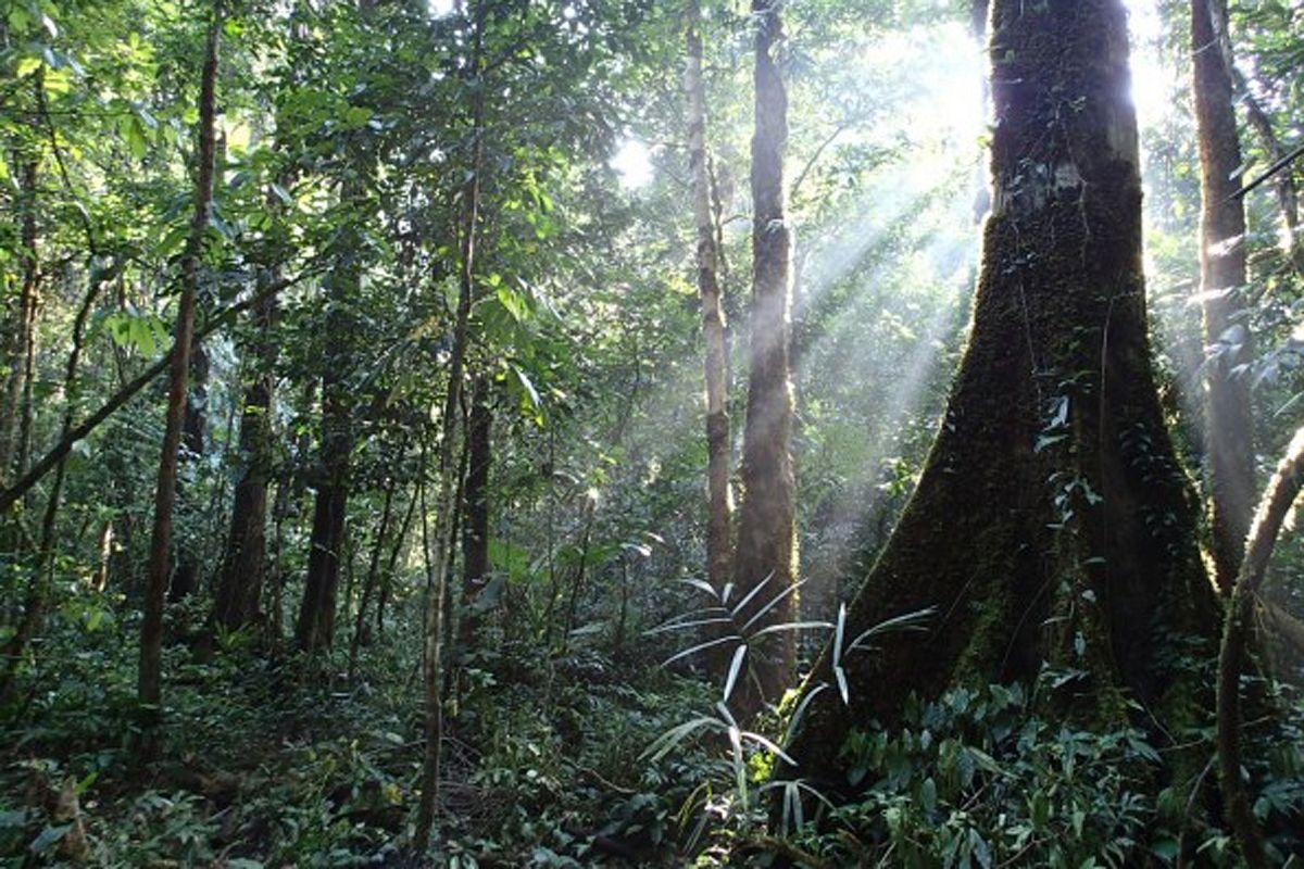 Lý thuyết về diễn biến rừng và một số suy nghĩ về lâm nghiệp Việt Nam