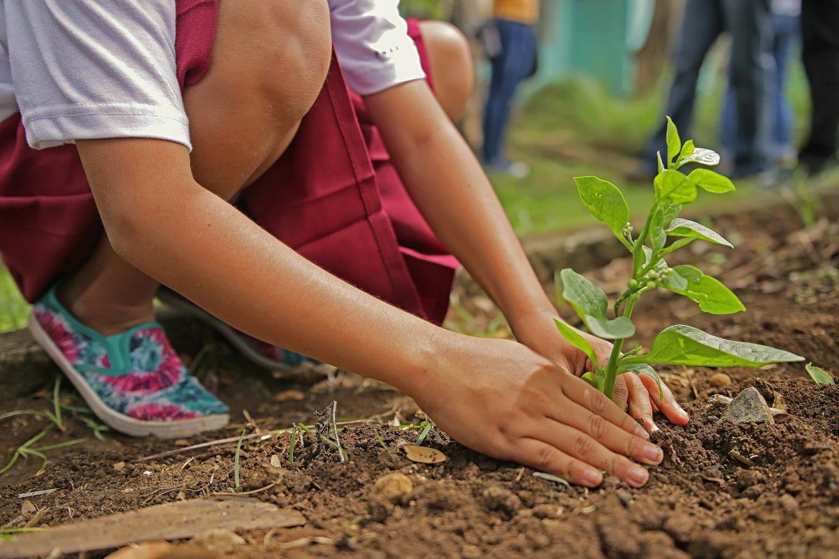 Tại sao cải thiện môi trường nên là một hành động chính trị?