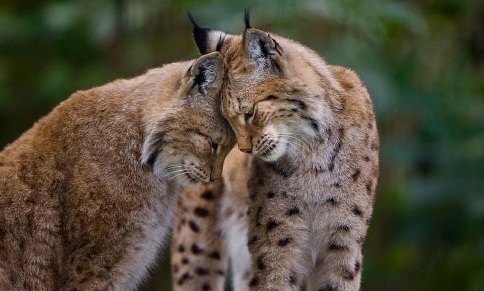 Chùm ảnh: Những khoảnh khắc dịu dàng hiếm có của động vật