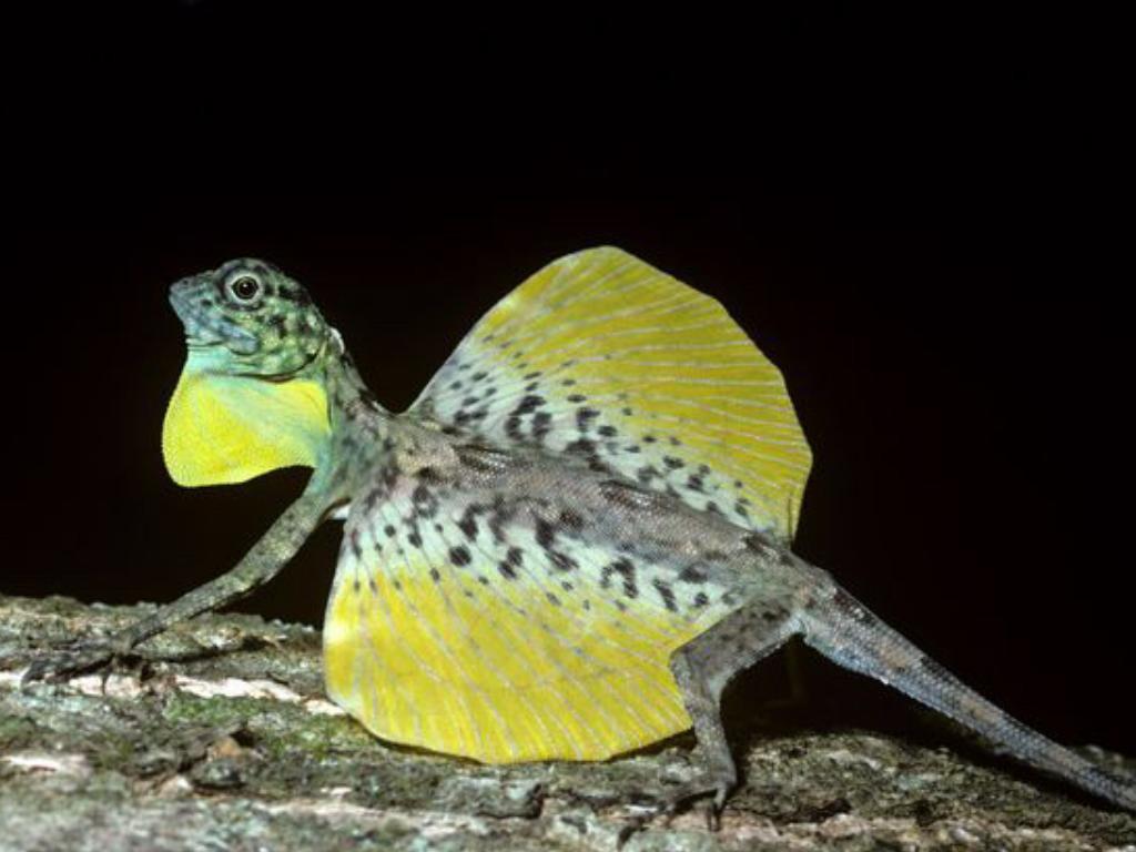 Chùm ảnh: Những động vật kỳ lạ ở đất nước Philippines
