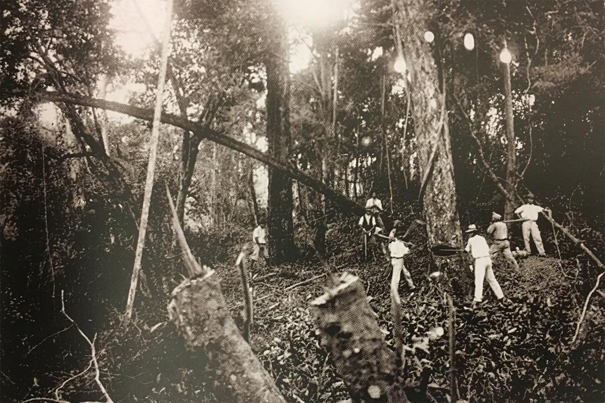 Cuộc di cư lịch sử của người Nhật đến Brazil