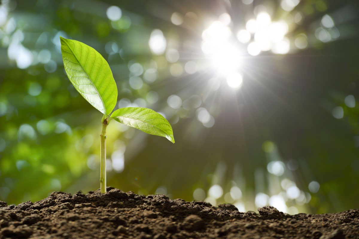 Làm vườn không chỉ là chăm cây mà còn là chăm sóc tâm hồn