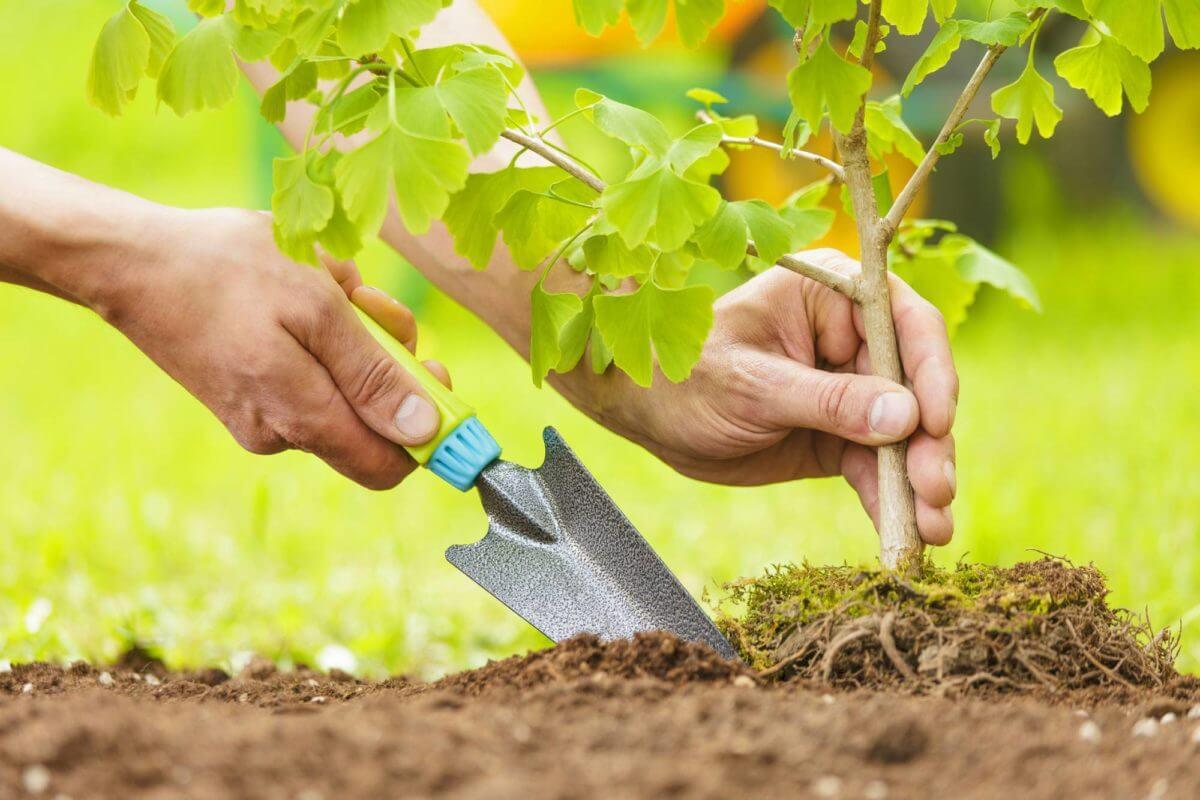 Cẩm nang bảo vệ môi trường trong sinh hoạt hàng ngày
