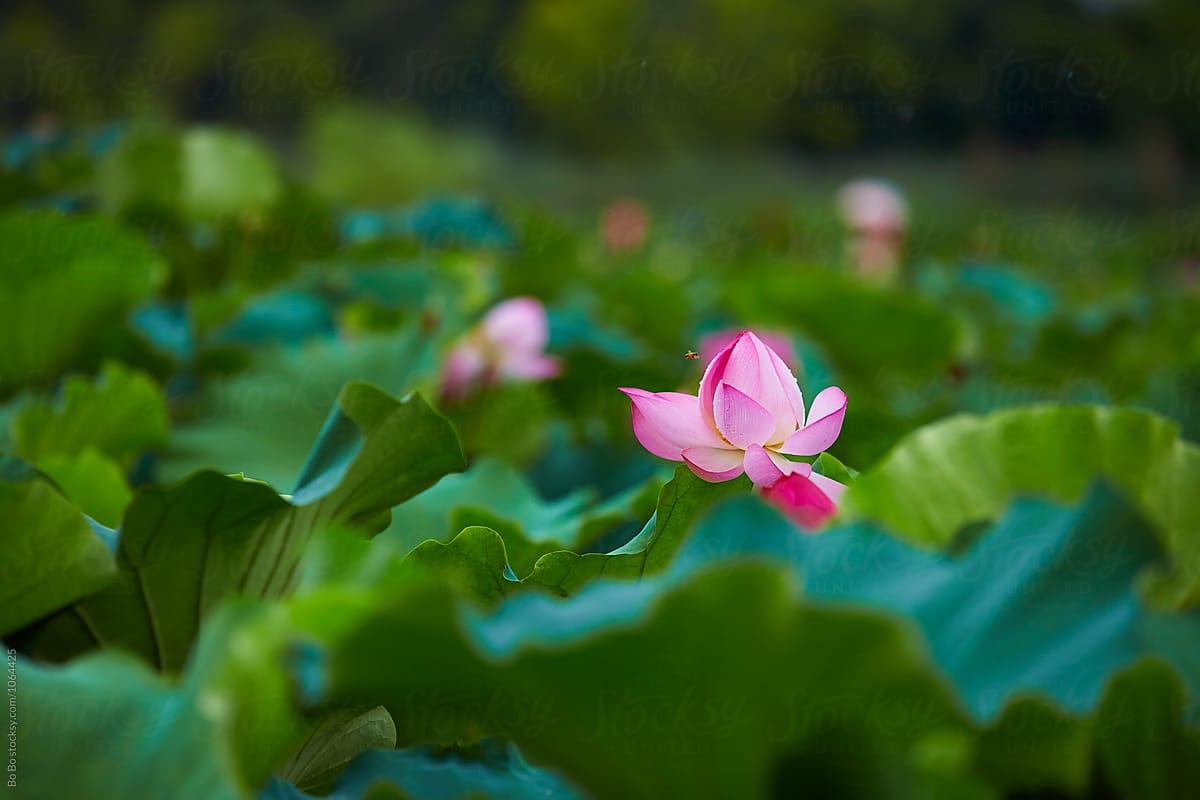 Lịch sử tiếp biến văn hóa ở Việt Nam