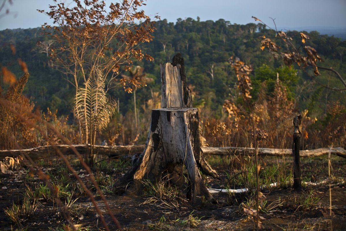 Tội phạm môi trường – một vấn nạn toàn cầu
