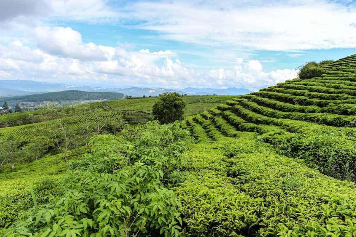 Bảo vệ môi trường – những điều cần ghi nhớ trong luật pháp Việt Nam